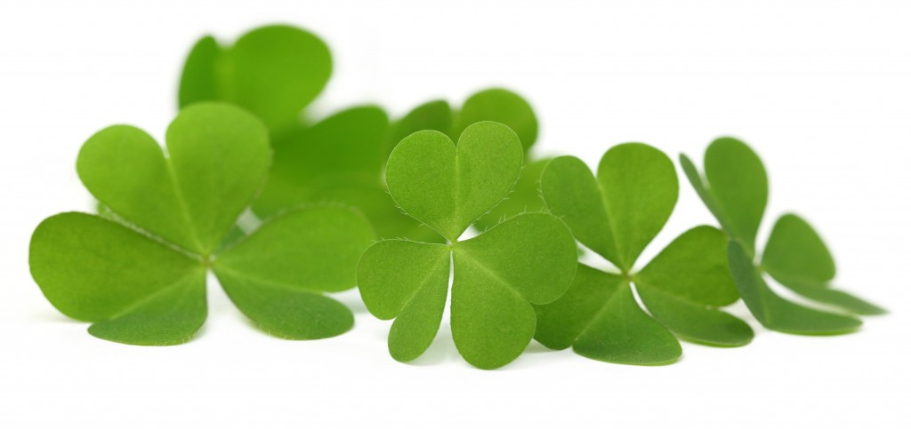 Decorative clover leaves over white background - One Small Child